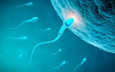 Fertilidade masculina | Por Dr. Armindo